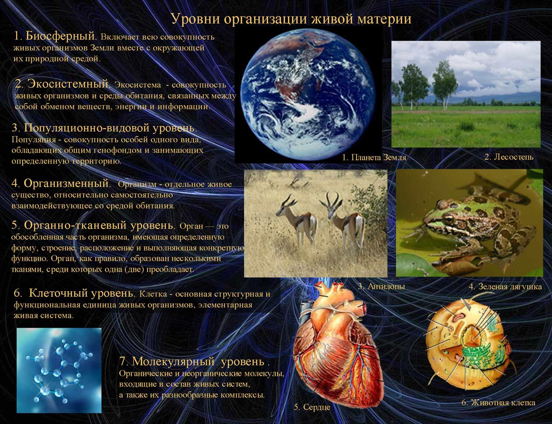 http://merkab.narod.ru/doklad/010.jpg